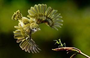 birdAndMantis